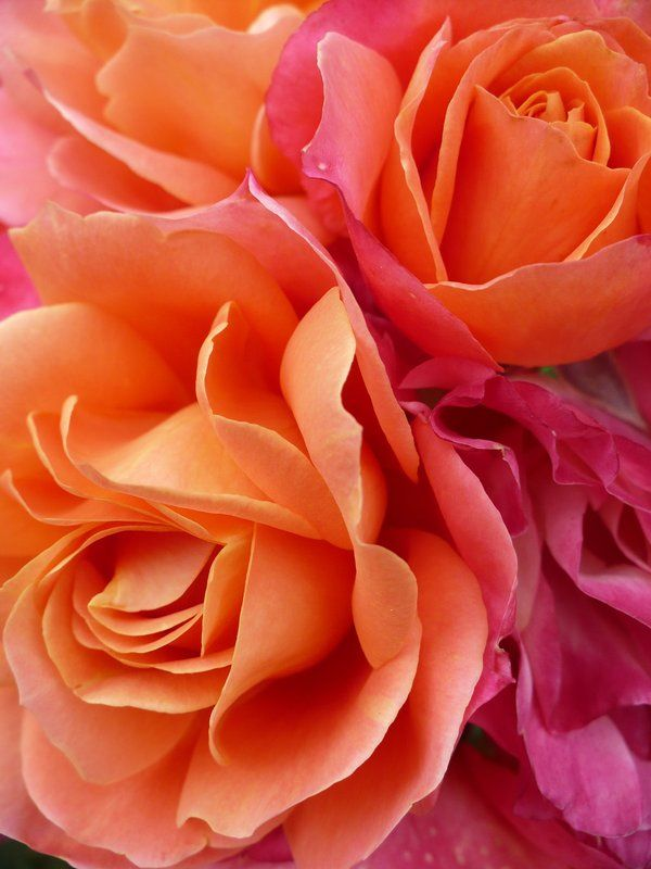 best images about orange flowers on, Beautiful flower