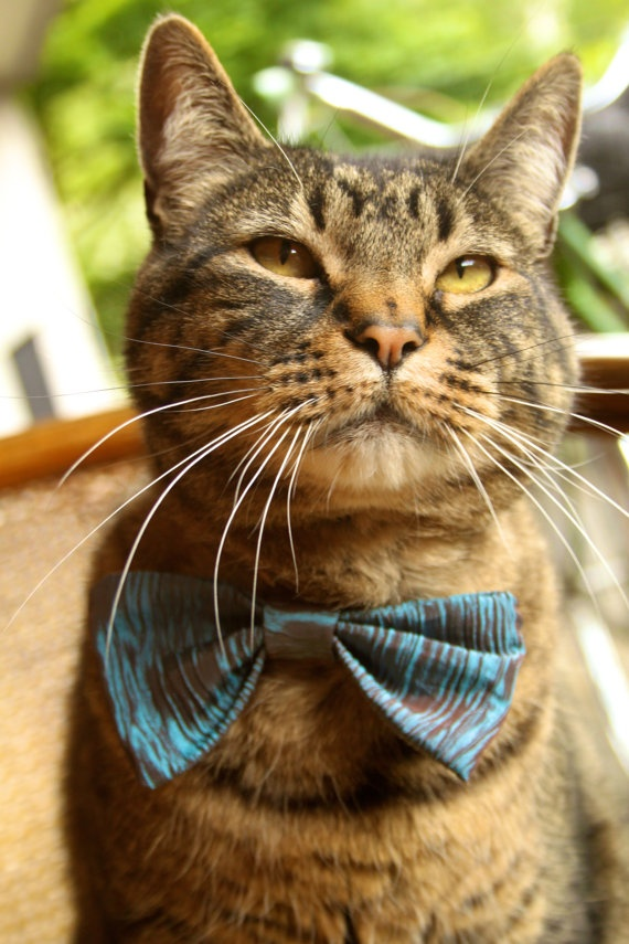 Cats One Wearing A Bowtie