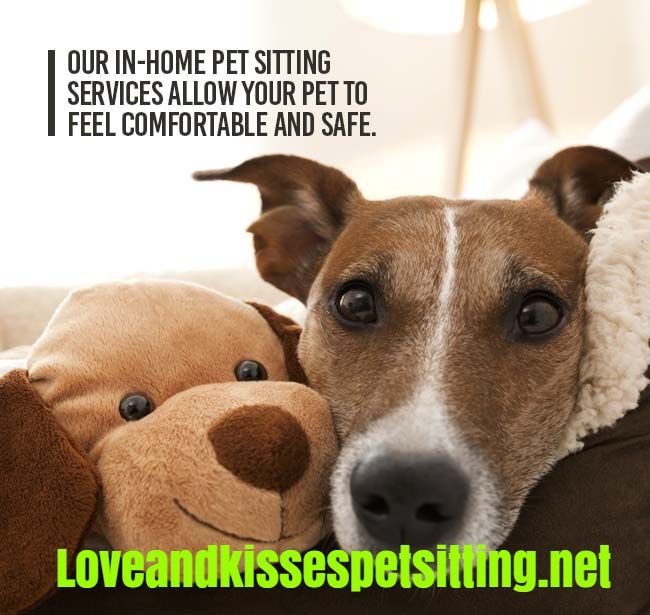 Our in-home pet sitting services allow your pet to feel comfortable and safe.  http://www.loveandkissespetsitting.net  #Petsitting #Pets