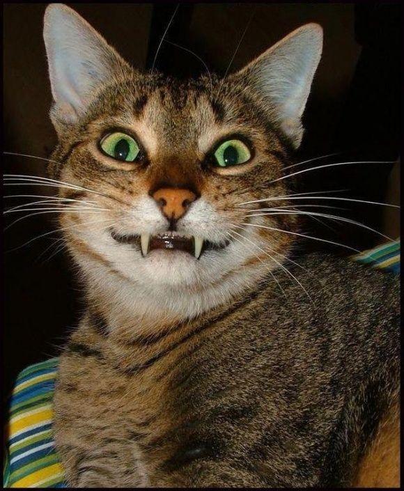 """Never Trust A Smiling Cat."" *"