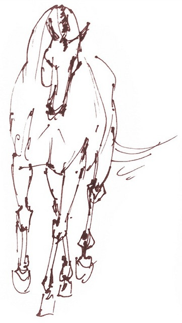 Best 25 Horse Sketch Ideas On Pinterest Sketches Of