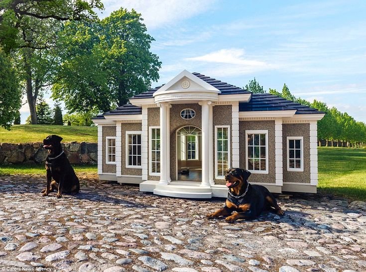 Luxury Kennels Costing More Than A Three Bedroom Home Fancy Dog