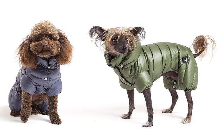 Arriva il freddo ed è tempo di shopping anche per loro: ecco i migliori piumini, maglioni e cappotti per cani, per ogni taglia! Sia eleganti, che sportivi!