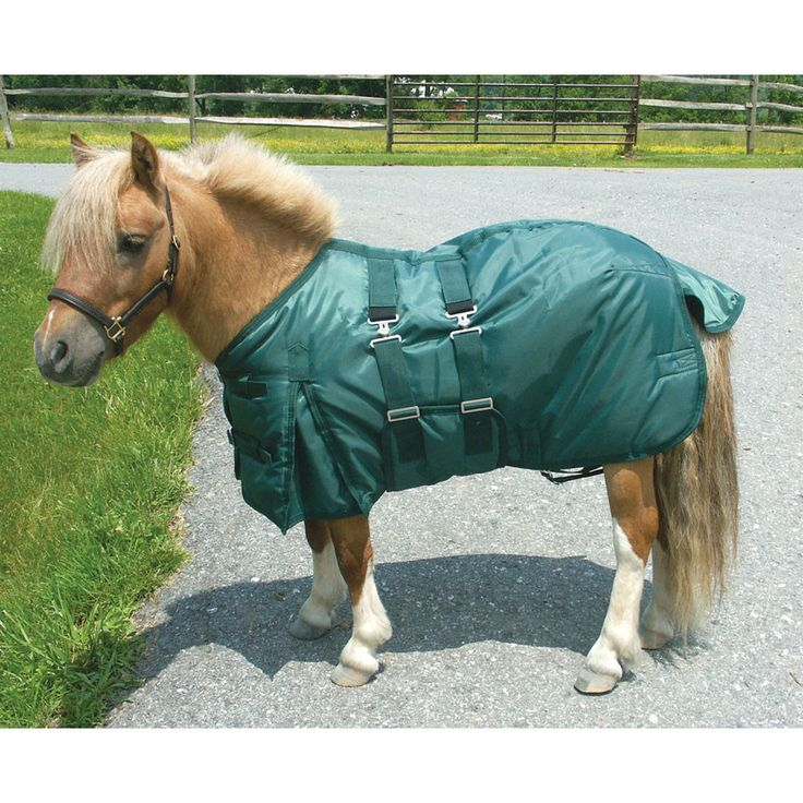 Miniature horse in a turn-out blanket.