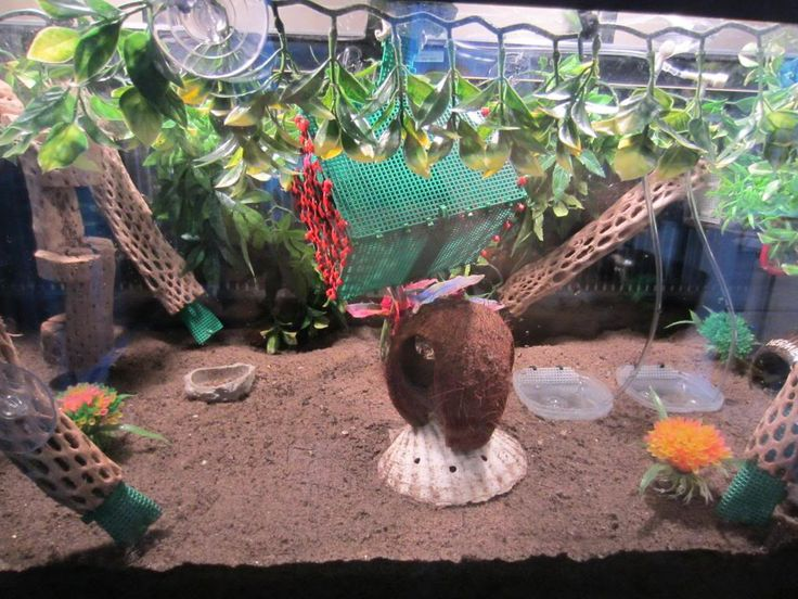 diy hermit crab toys   decided it was time to put some bubbles in my pools too!