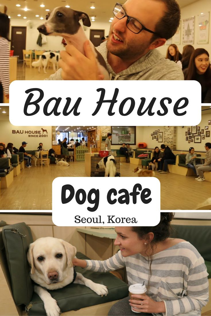 What to do and how to get to Bau house dog cafe in Seoul.