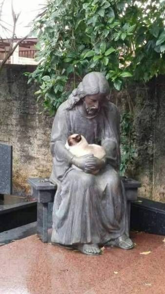 cat curled up in a statue's arms