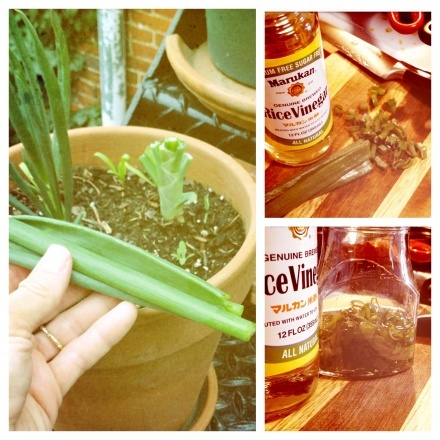 A gardener's re-use of sprouted pantry onions - Peel soft outer layers, plant, grow the greens for scallions.  Quick pickle for a condiment!