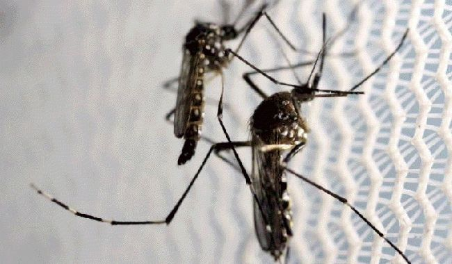 Singapore confirms 41 cases of locally-transmitted Zika virus