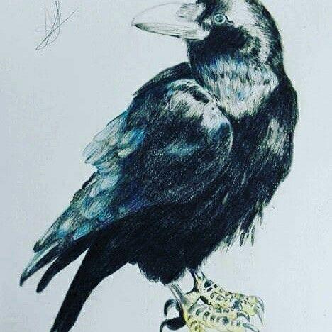 Cuervo con lápices de colores