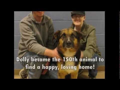 how to become part of the humane society