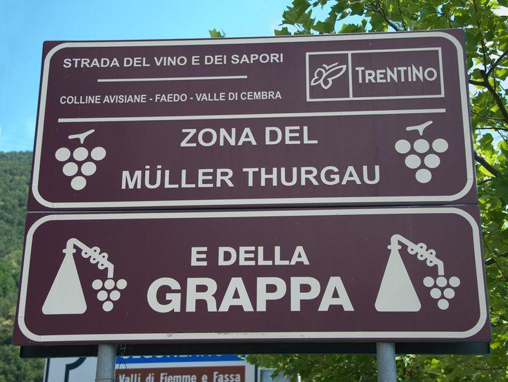 #Trentino #grappa #Muller #Thurgau #Cembra