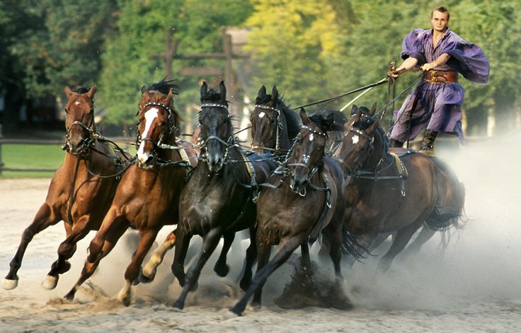 Puszta Ten horses in action, Hungary.