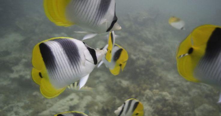 Ecosistema de océanos para niños. Cinco océanos constituyen el 71% de la superficie terrestre, y están llenos de vida. National Geographic informa que el 80% de la vida en la Tierra se encuentra en estos. Las plantas y los animales que los habitan son diversos, con el coral que crece en temperaturas tropicales y focas que se alimentan en el Océano Antártico Sur. Aprende más sobre ...