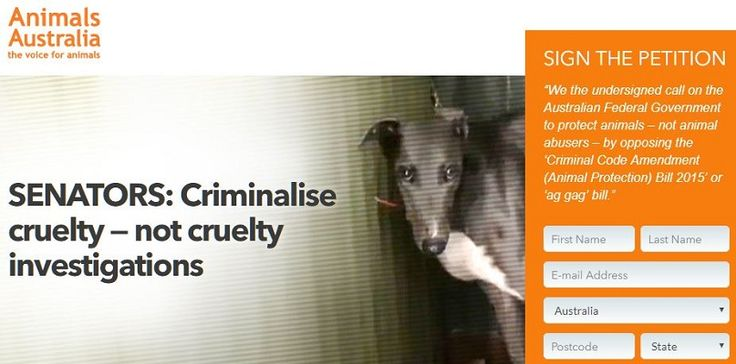 SENATORS: Criminalise cruelty - not cruelty investigations - say no to ag-gag