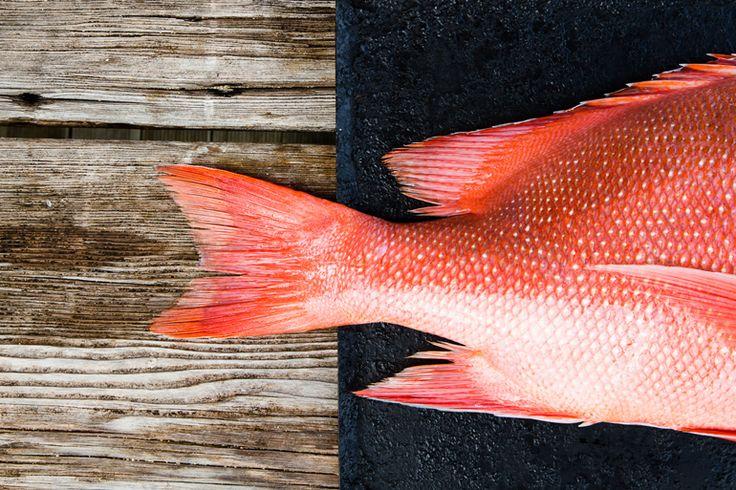 Fresh fish every day | Lord Howe Island