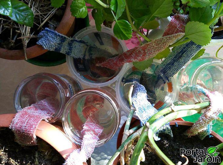 más de 25 ideas increíbles sobre auto riego en pinterest