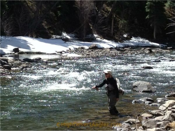 78 best images about reel time on pinterest news mexico for New mexico fishing