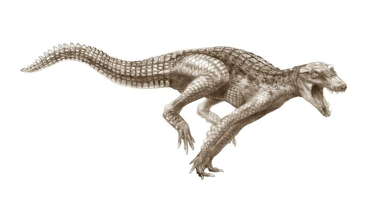 The primitive crocodiles were efficient swimmers but were also capable of galloping across the plains