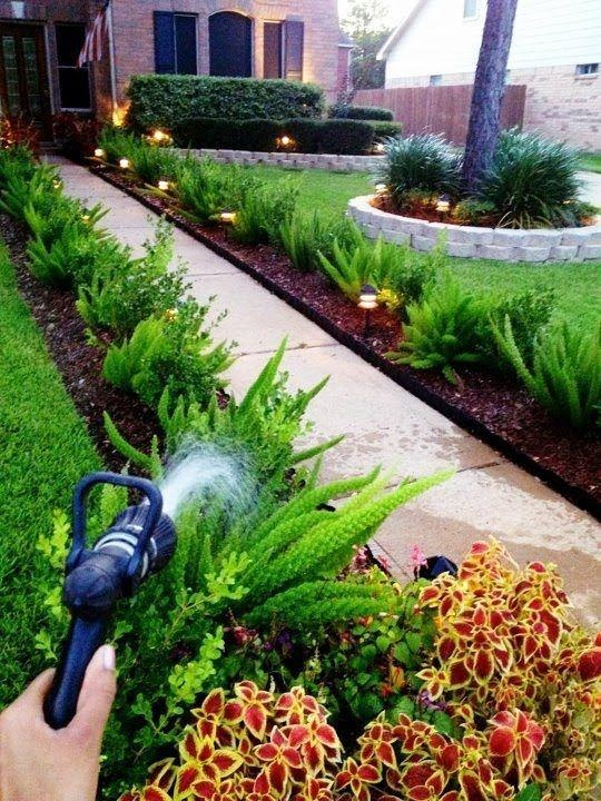 Landscaping With Ferns : Best ideas about asparagus fern on drought