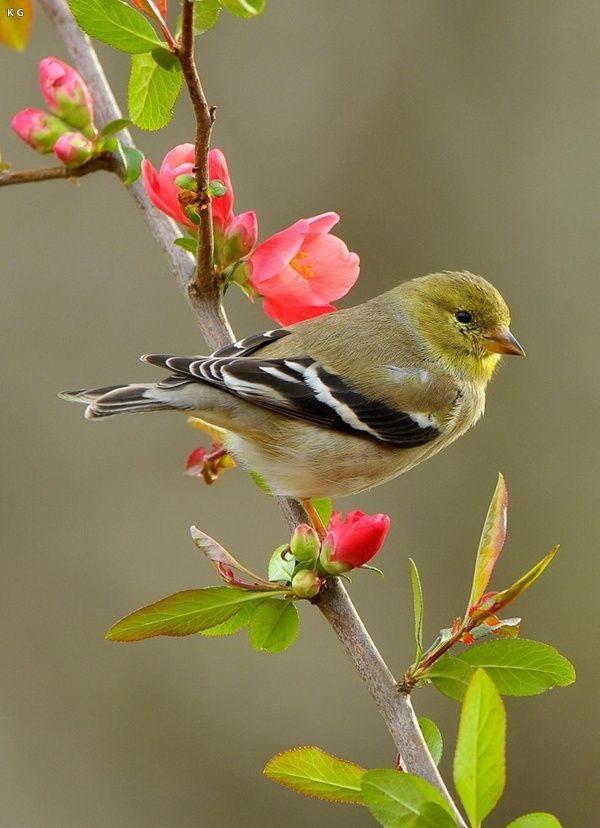 19 Best Birds Images On Pinterest