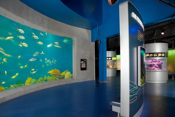 40 000 Gallon Gulf Of Mexico Aquarium Featuring Exotic
