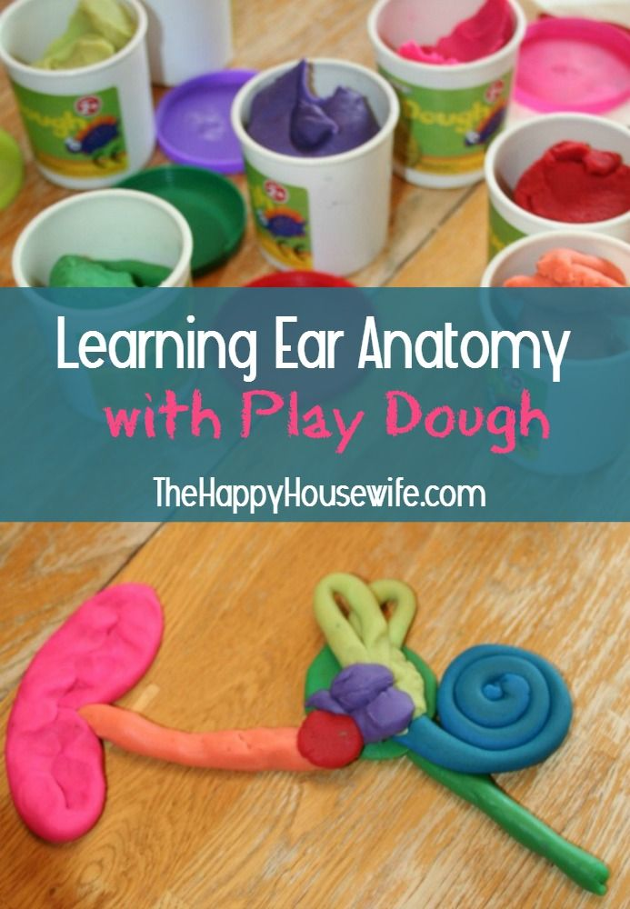 Learning Ear Anatomy with Play Dough at The Happy Housewife