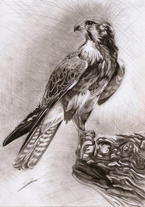 Falcon by AmBr0.deviantart.com on @deviantART