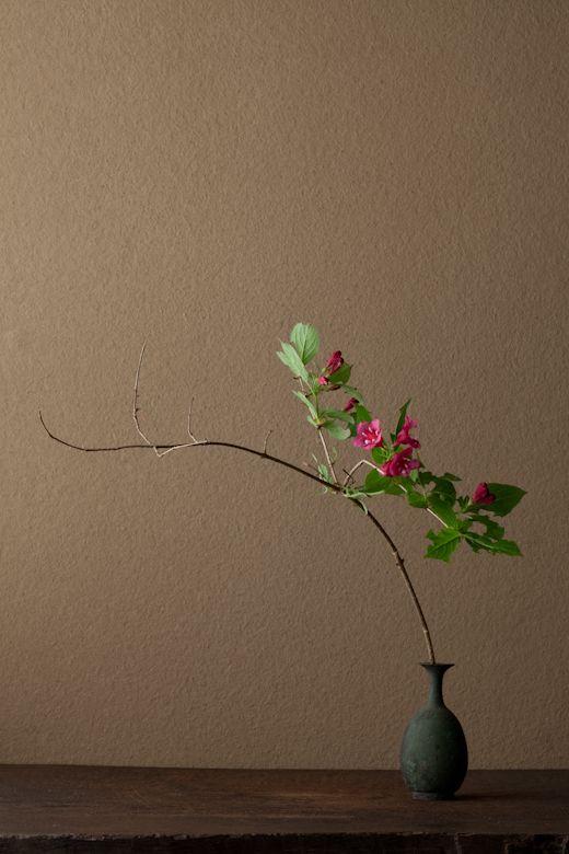 2012年6月13日(水) 花の色は白から紅色に変ります。名に反して、箱根では見ないそうです。 花=箱根空木(ハコネウツギ) 器=青銅王子形水瓶(六朝時代)