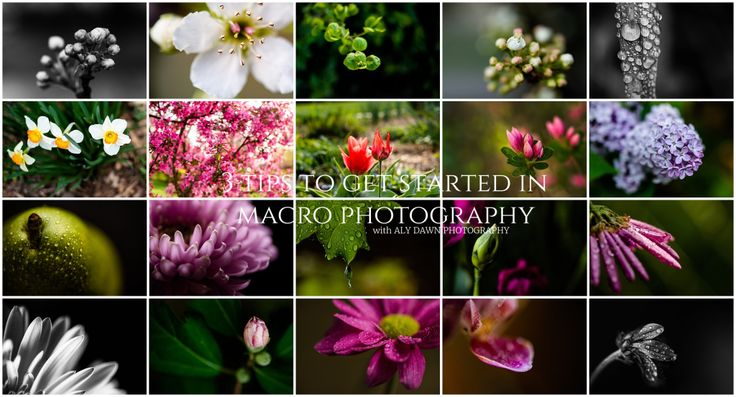 I don't claim to be an expert in macro photography. But it is definitely one of my favorite genre's of photography. It's very soothing and relaxing. I also love the beauty of natu…