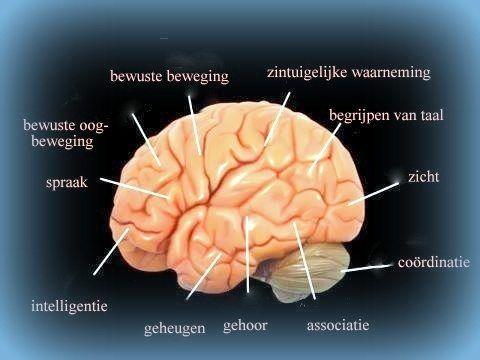 Traumatisch hersenletsel / Oorzaken Ziektenbeelden | Hersenletsel-uitleg.nl