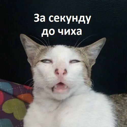 Самые забавные фото котов со смешными подписями в 2020 г ...