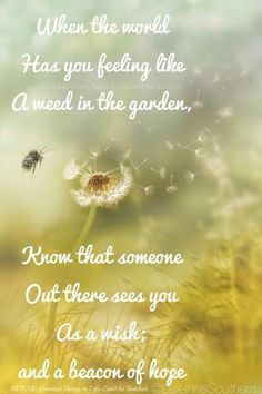 dandelion quotes - Google Search