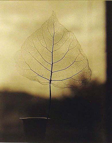 skeleton leaf only life and it's fragility