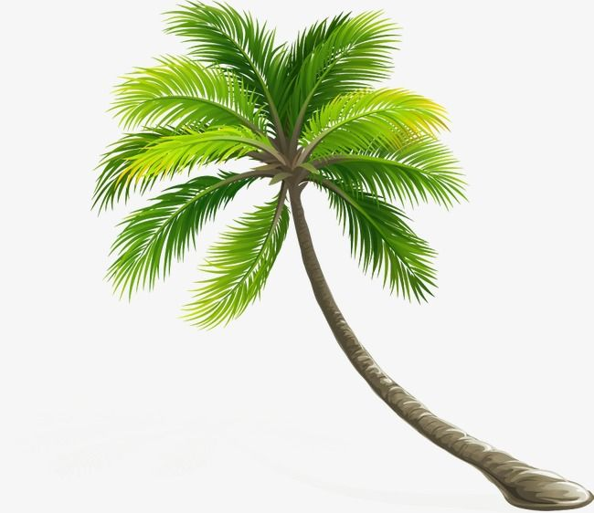 Tree Palm Tree Tree Clipart Elaeis Png Transparent Clipart Image And Psd File For Free Download Coconut Tree Drawing Palm Tree Png Tree Images
