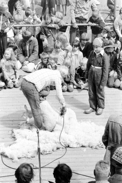 West-Friese Markt: de oude ambachten -schapenscheerder