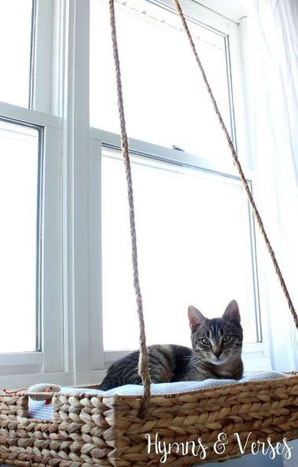 Panier suspendu face à la fenêtre pour chat curieux