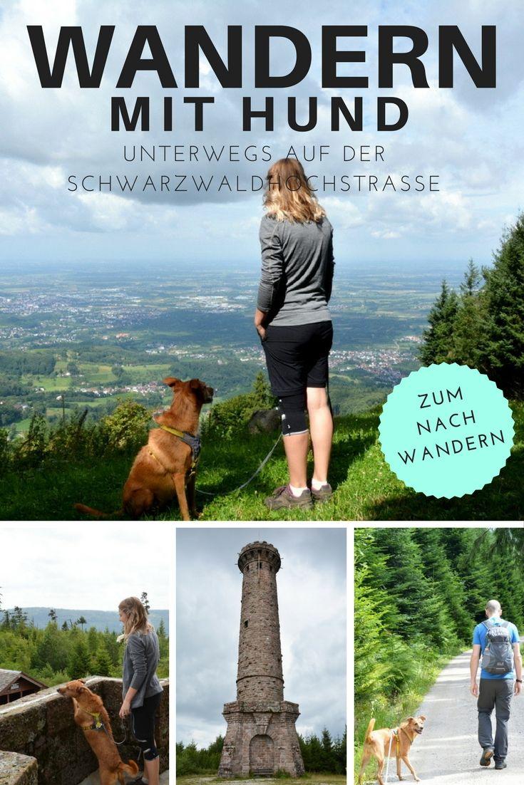 Schwarzwaldhochstraße – Wandern mit Hund  