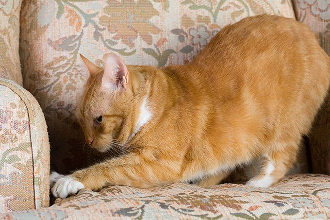 Why Do Cats Knead 5 Reasons Your Cat Kneads You Cat Behavior Cat Facts Cat Love