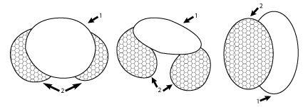 Clé de détermination des principaux pollens et spores