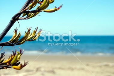 New Zealand Flax Flower and Sea Royalty Free Stock Photo