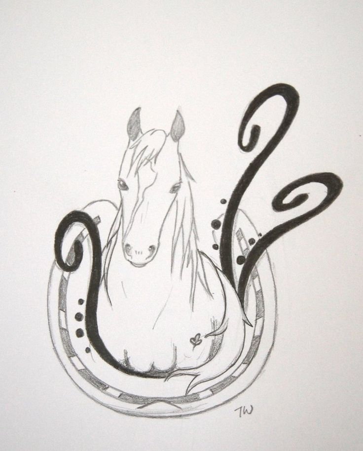 Horse Line Drawing Tattoo : Best horse tattoo designs drawings images on pinterest
