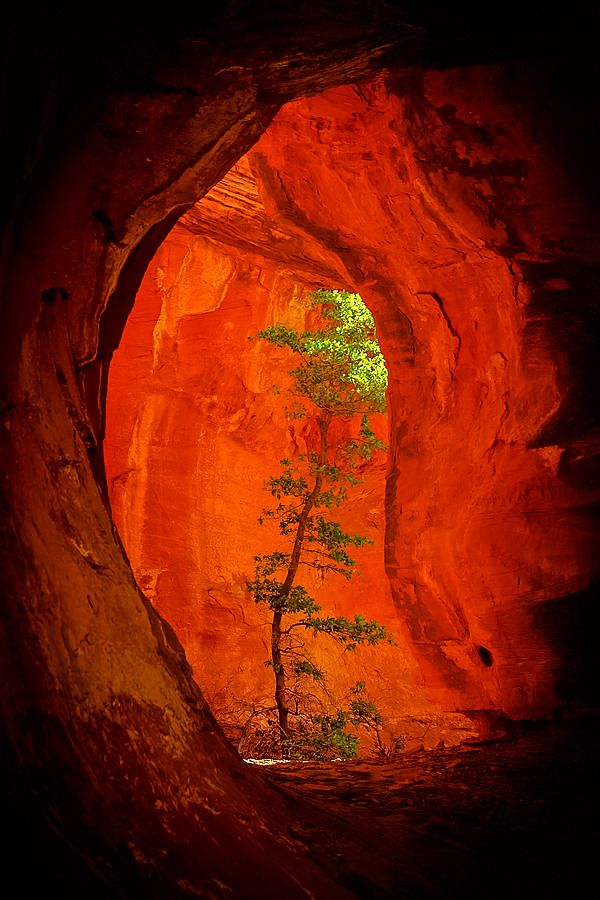 "coiour-my-world: ""Boynton Canyon, Sedona, Arizona """