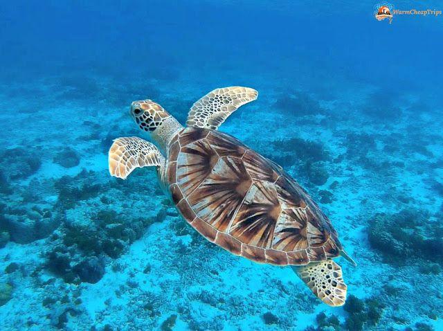 Zamami, l'isola Giapponese dove nuotare con le tartarughe.