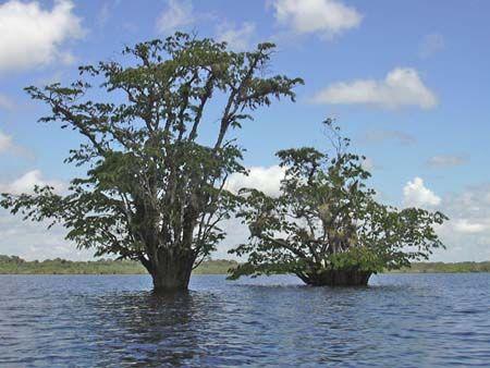 Dessin de foret amazonienne recherche google arbres dessins dessin de foret dessin arbre - Dessin arbre chinois ...