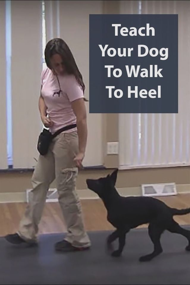 Heel Tips Teaching A Dog To Heel In Simple Stages Dog Training