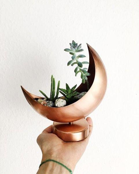 Un pot en cuivre pour micro jardin d'intérieur