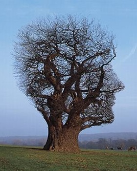 Storm Thorgerson - Pink Floyd - Tree of Half Life
