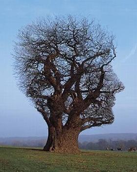 Storm Thorgerson - Pink Floyd - Tree of Half Life