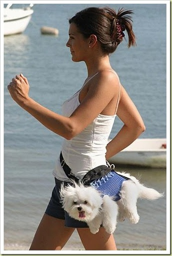 Knitted dog carriers- for the speed walker with short legged K9's....if I did this with my cavalier, she would bite a whole in my leg!